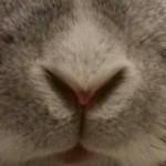 Profile photo of くるみのひろば