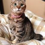 ネコ好きさん必見(●ↀωↀ●)✧ねこ写真撮り方講座